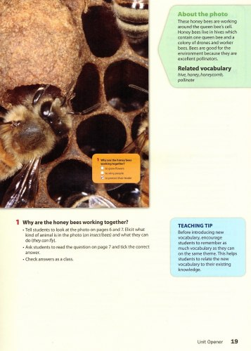 Wonderful World (2nd Edition) 4 Lesson Planner with Class Audio CD, DVD, and Teacher's Resource CD-ROM / Підручник для вчителя