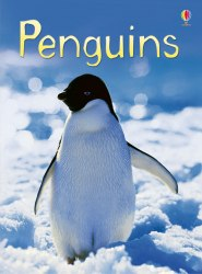 Beginners: Penguins
