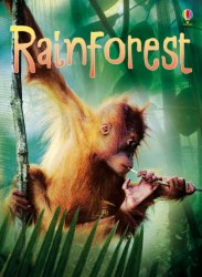 Beginners: Rainforests