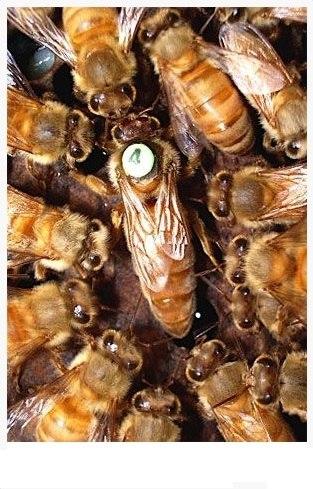 мордовский костюм куплю пчелку электро в усть каменогорске показываем лучшие