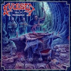 "AVULSED - Altar Of Disembowelment 10"" MLP Death Metal"