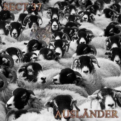 SECTION 37 - Auslander Digi-CD Experimental Music