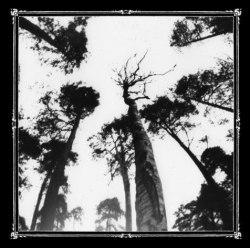 ANCESTORS BLOOD - When The Forest Calls MCD Heathen Metal