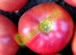 Семена томатов Микадо розовый - среднерослый, до 300 г, ранний. Семенаград - семена почтой