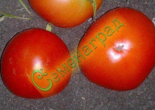 Семена томатов Монгольский карлик (20 семян - низкорослый, ранний, до 100 г)