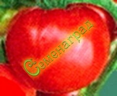 Семена почтой томаты Морковные (20 семян - до 200 г, ранний, низкорослый, морковный лист)