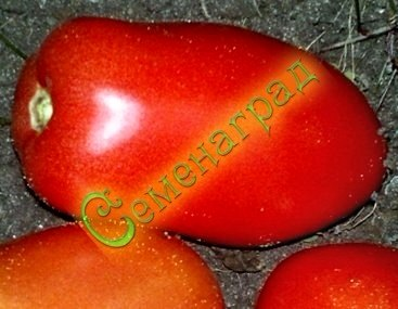 Семена томатов Настенька (20 семян - низкорослый, ранний, розовый, сердцевидный, до 200 г)