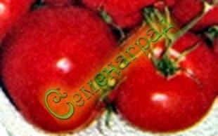 Семена томатов Север красный - до 150 г, ранний, среднерослый, устойчивый. Семенаград - семена почтой