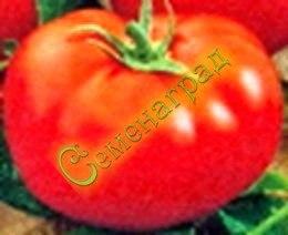 Семена томатов Сибирский скороспелый (20 семян - среднерослый, до 350 г, ранний)