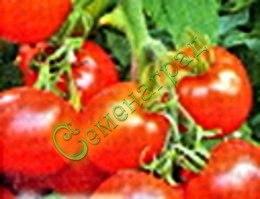 Семена томатов Супергонец (20 семян - среднерослый, ранний, до 100 г)