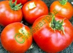 Семена томатов Украинец - среднерослый, ранний, до 250 г, впечатляет урожайностью. Семенаград - семена почтой