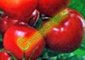 Семена томатов Утро (20 семян - до 200 г, среднерослый, ранний, устойчивый)