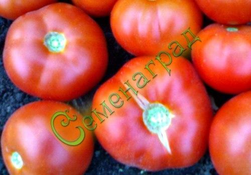 Семена томатов Хан - 1 уп.-20 семян - ранний, низкорослый, до 200 г, урожайный. Семенаград - семена почтой