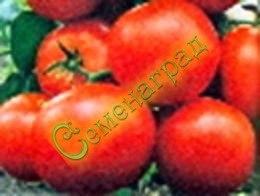 Семена почтой томат Японский карлик (20 семян - низкорослый, до 200 г, ранний)