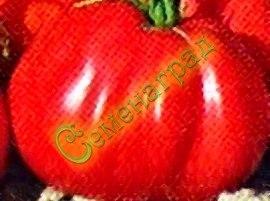 Семена томатов Японский трюфель (20 семян - среднерослый, ранний, до 200 г)