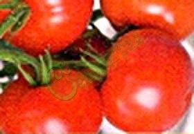 Семена томатов Кемеровский, 1 уп.-20 семян - ранний, до 150 г, низкорослый, урожайный. Семенаград - семена почтой