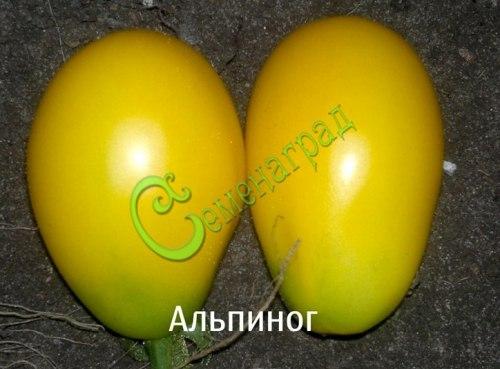 Семена томатов Альпиног - 20 семян - высокорослый, до 100 г, желтый, многоплодный, с длинными кистями