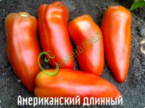 Семена томатов Американский длинный - 1 уп.-20 семян - высокорослый, как длинный перец, не отличишь, до 30 см, эксклюзив, семена мелкие, сажать неглубоко (0,5 см), температура почвы не ниже +25 С. Семенаград - семена почтой