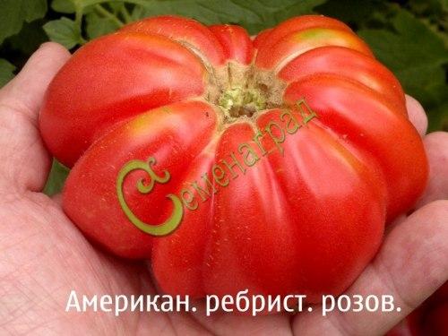 Семена томатов Американский ребристый розовый, 1 уп.-20 семян - высокорослый, круглоплоский, до 500 г. Семенаград - семена почтой