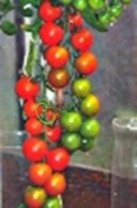 Семена томатов Американский сладкий красный - 1 уп.-20 семян - высокорослый, до 60 г, длинные кисти, урожайный, красавец. Семенаград - семена почтой