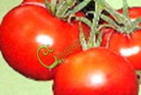 Семена томатов Американский широколистный - 1 уп.-20 семян - высокорослый, до 200 г, очень урожайный. Семенаград - семена почтой