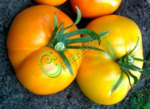 Семена томатов Апельсин - 1 уп.-20 семян - высокорослый, желто-оранжевый, до 300 г. Семенаград - семена почтой