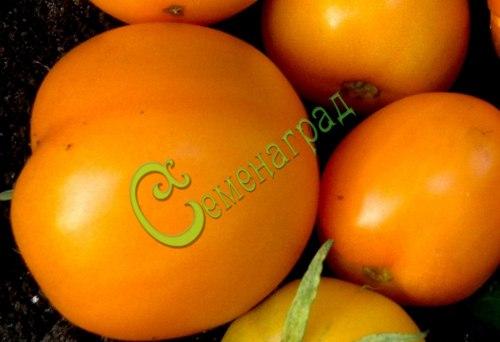 Семена томатов Аполлон оранжевый - 20 семян - высокорослый, до 300 г, круглый, плотный, сладкий