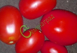 Семена томатов Аргентинская сливка розовая - 1 уп.-20 семян - высокорослый, необыкновенно урожайный, до 80 г, в солку. Семенаград - семена почтой