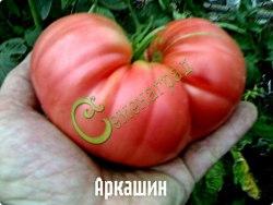 Семена томатов Аркашин - 1 уп.-20 семян - высокорослый, розовый, до 500 г, врезался в память. Семенаград - семена почтой
