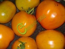 Семена томатов Астра ЖС - 1 уп.-20 семян - высокорослый, до 400 г, малосемянный, оранжевый, сладкий, отличный каждый год. Семенаград - семена почтой