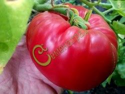 Семена томатов Бабушкин секрет - 1 уп.-20 семян - среднерослый, 1,5 м, до 800 г, круглоплоский, розовый. Семенаград - семена почтой