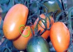 Семена томатов Банан - 1 уп.-20 семян - высокорослый, до 100 г, оранжевый, многоплодный, впечатляет. Семенаград - семена почтой