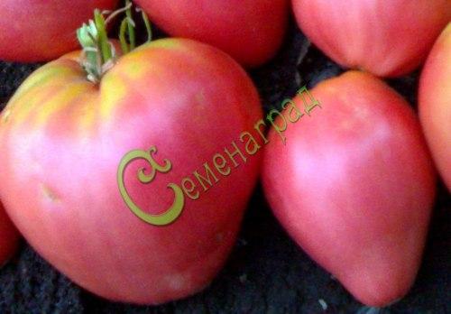 Семена томатов Башкирский красавец - высокорослый, сердцевидный, до 500 г, розовый. Семенаград - семена почтой