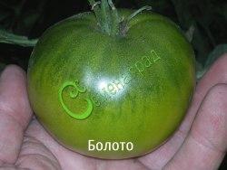 Семена томатов Болото - 1 уп.-20 семян - высокорослый, зелёный, до 300 г, сладкий, селекция МСХА. Семенаград - семена почтой