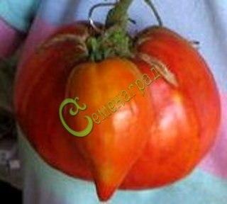 Семена томатов Большое сердце - 1 уп.-20 семян - высокорослый, до 1 кг, урожайный. Семенаград - семена почтой