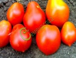 Семена томатов Бразильская сливка красная - 1 уп.-20 семян - высокорослый, до 80 г, урожайный, ранний, с кончиком, отличный. Семенаград - семена почтой