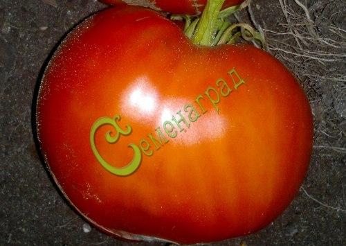 Семена томатов Буденновка, 1 уп.-20 семян - высокорослый, до 600 г, не забудете. Семенаград - семена почтой