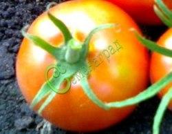 Семена томатов Великолепный - 1 уп.-20 семян - высокорослый, до 500 г, название оправдывает из года в год. Семенаград - семена почтой