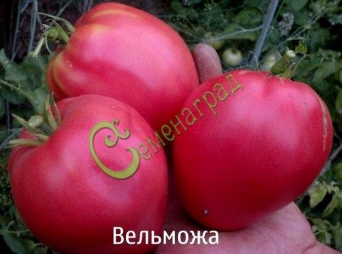 Семена томатов Вельможа, 1 уп.-20 семян - среднерослый, сердцевидный, розовый, до 400 г, очень урожайный. Семенаград - семена почтой