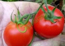 Семена томатов Верлиока плюс - 1 уп.-20 семян - среднерослый, ранний, до 80 г, очень урожайный и популярный. Семенаград - семена почтой