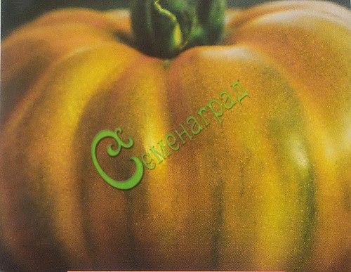 Семена почтой томат Вечнозелёный - 20 семян, высокорослый, до 150 г, изумрудно-зеленый, подслащенный