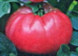 Семена томатов Вова - 20 семян - высокорослый, до 1 кг, розовый