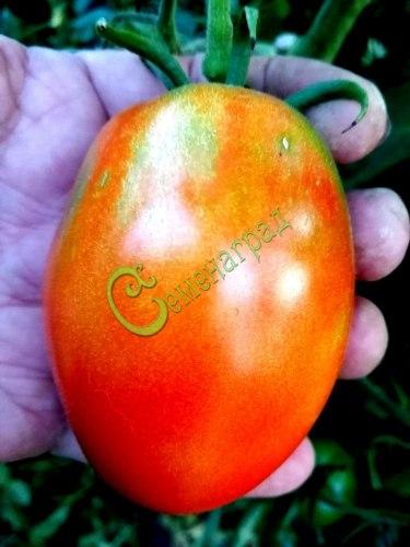 Семена томатов Воловье сердце, 1 уп.-20 семян - до 400 г, высокорослый, овальный. Семенаград - семена почтой