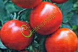 Семена томатов Гибрид-4 Тарасенко - 1 уп.-20 семян - высокорослый, до 100 г, округлый, урожайный. Семенаград - семена почтой
