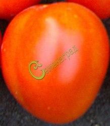 Семена томатов Гибрид-6 Тарасенко - 1 уп.-20 семян - высокорослый, плоды округлые, до 250 г, урожайный. Семенаград - семена почтой