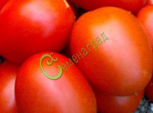 Семена томатов Гибрид-35 Тарасенко, 1 уп.-20 семян - высокорослый, до 150 г, округло-овальный, урожайный. Семенаград - семена почтой