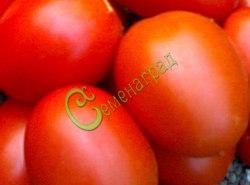 Семена томатов Гибрид-35 Тарасенко - 1 уп.-20 семян - высокорослый, до 150 г, округло-овальный, урожайный. Семенаград - семена почтой