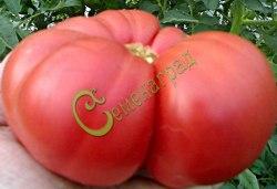 Семена томатов Гигант Новикова - 1 уп.-20 семян - высокорослый, до 1 кг, розовый, популярный. Семенаград - семена почтой