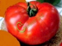 Семена томатов Гигант-2 Новикова - 20 семян - высокорослый, до 400 г