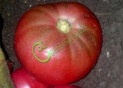 Семена томатов Гигант Пулереса - 1 уп.-20 семян - среднерослый, до 700 г, розовый, ранний. Семенаград - семена почтой